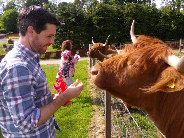 Liz and Matt feed the hairy coos at Cardhu distillery